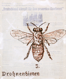 Drohnenbienen - José De Quadros