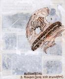 Kohlweibling - 3. Raupen (Jung Und Erwachsen) - José De Quadros
