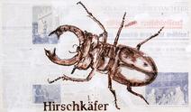 Hirschkafer - José De Quadros