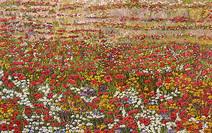 Primavera colorida - Marli Pereira Oliveira