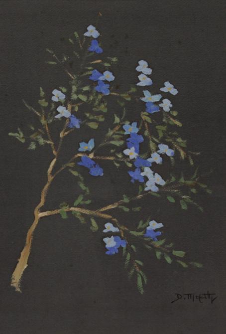 Flores-dario-mecatti