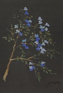 Flores - Dario Mecatti