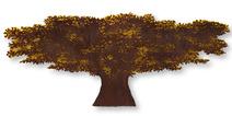 Árvore com sombra ferrugem e amarela - Cássio Lázaro
